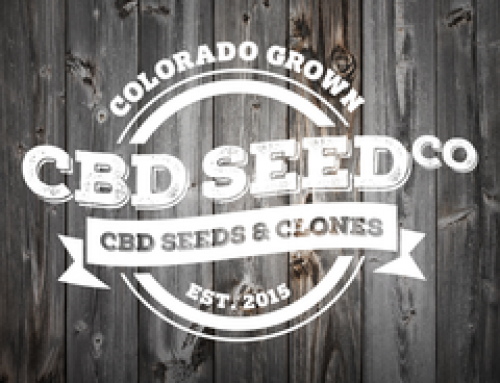 OVER 500 KILOS OF HIGH CBD SEED READY FOR 2018