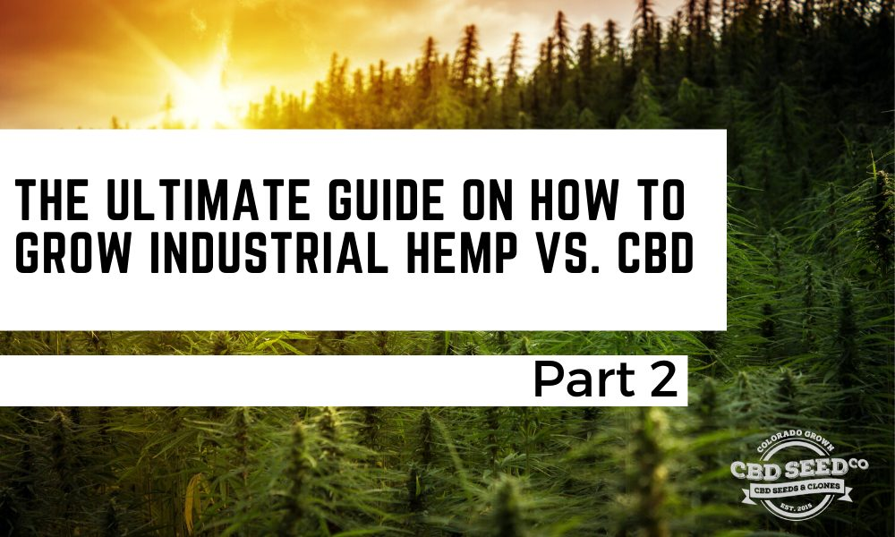 the ultimate guide on how to grow industrial cbd vs. hemp