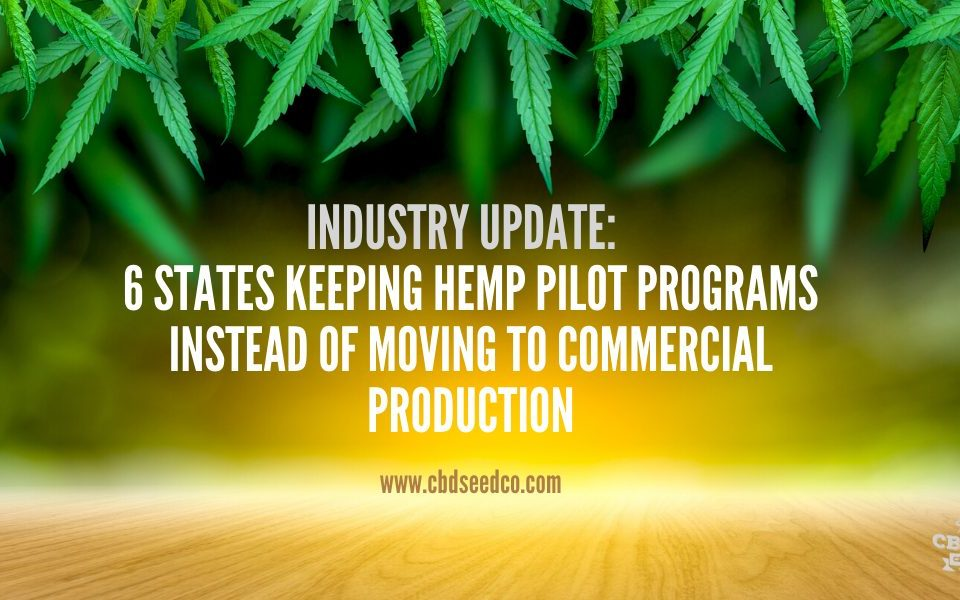 hemp industry pilot programs
