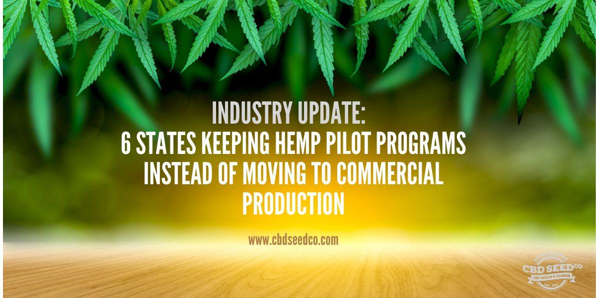 hemp industry pilot programs