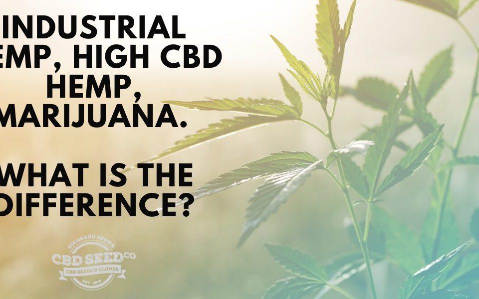 industrial hemp, high cbd hemp, marijuana. What is the difference?