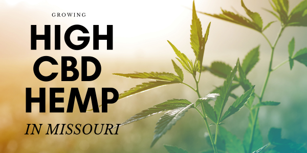 Copy of Growing High CBD hemp in Missouri