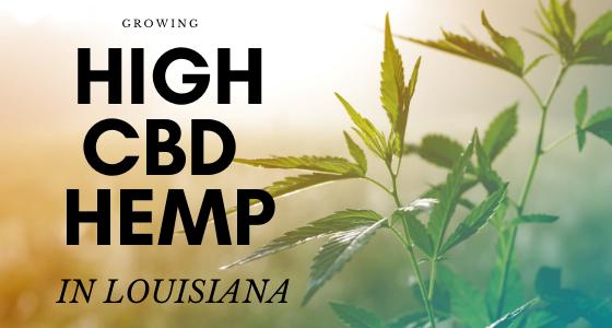 Growing High CBD hemp Louisiana