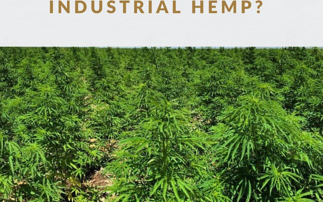 what are the applications for industrial hemp