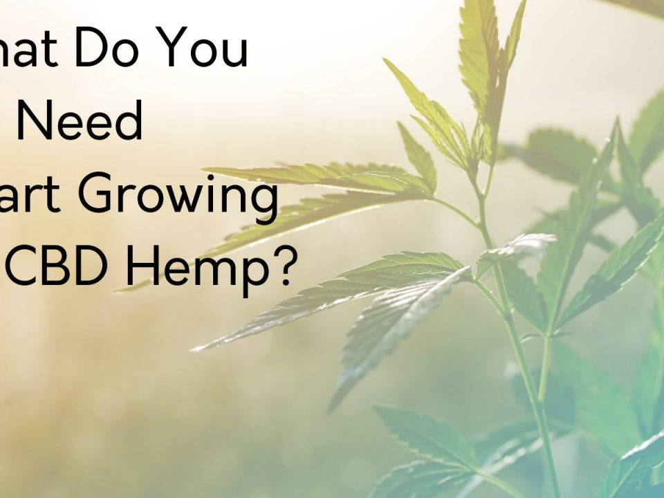 what do you need to start growing hemp