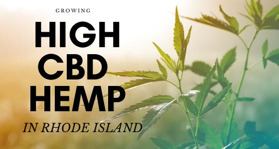 cbd seed co, growing high cbd hemp in rhode island