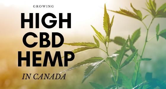 growing high cbd hemp in Canada