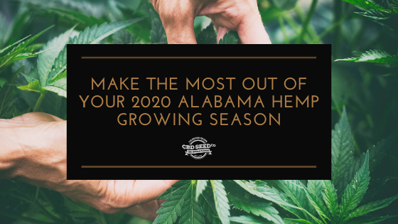 make the most out of your 2020 alabama hemp growing season