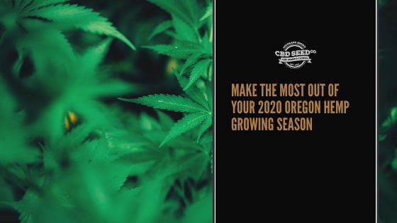 cbd seed co, make the most out of your 2020 oregon hemp growing season