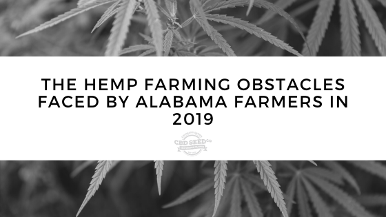cbd seed, the hemp farming obstacles faceby alabama farmers in 2019