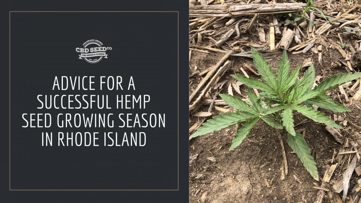 advice hemp seed growing rhode island