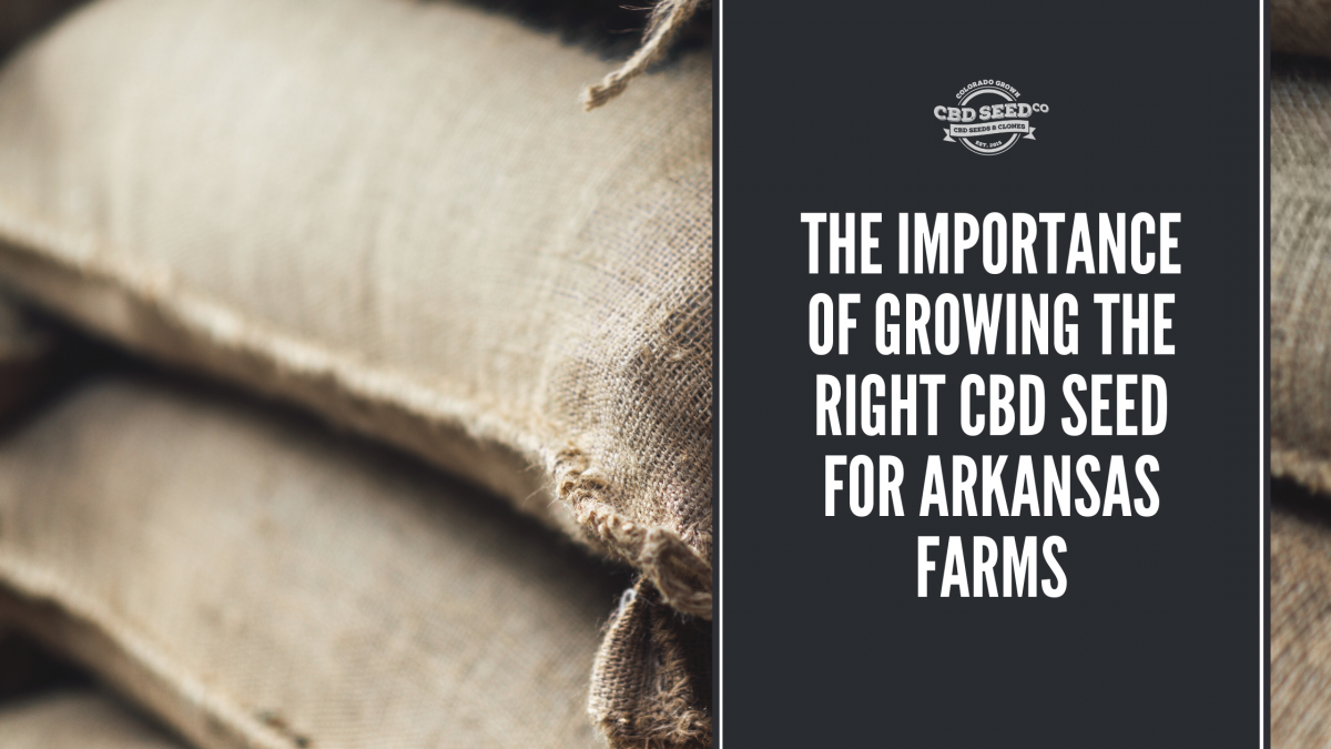 the important of growing the right cbd seed for arkansas farms