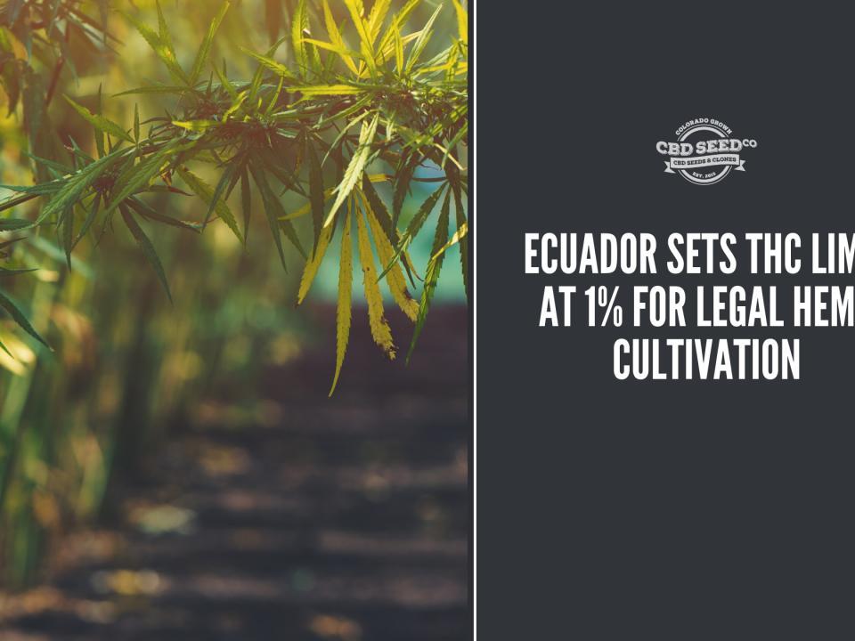 cbd seed ecuador