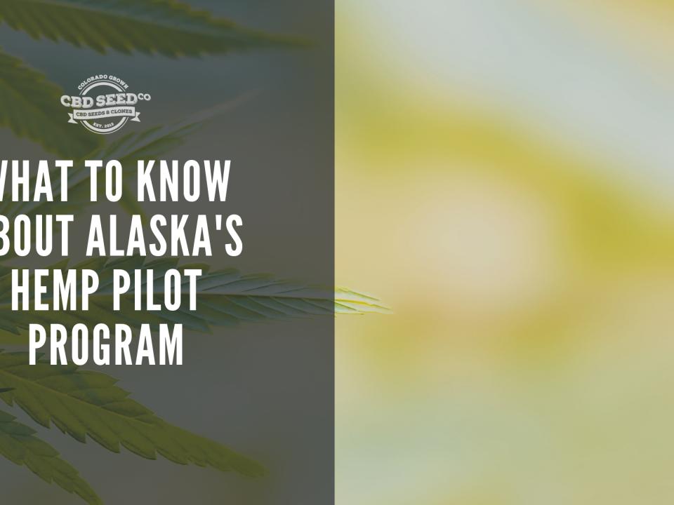 hemp plan, what to know about alaska hemp pilot program