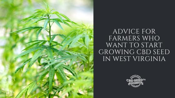 advice growing cbd seed west virginia