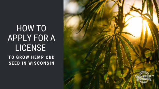 how to apply for a license to grow hemp cbd seed in wisconsin