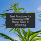best practices for growing cbd in wyoming