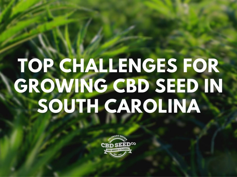 challenges growing cbd seeds in south carolina