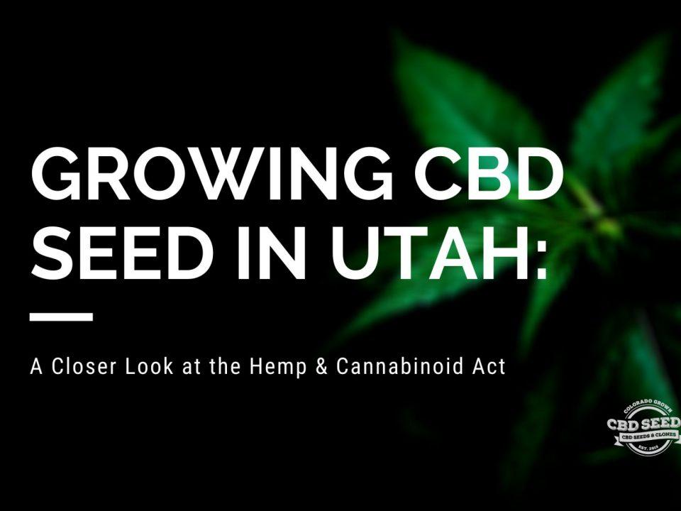 growing cbd seed utah hemp cannabinoid act