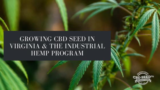 growing cbd seed virginia hemp program