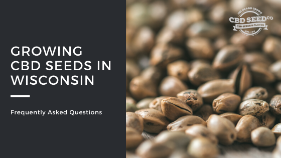 growing cbd seed in wisconsin faq