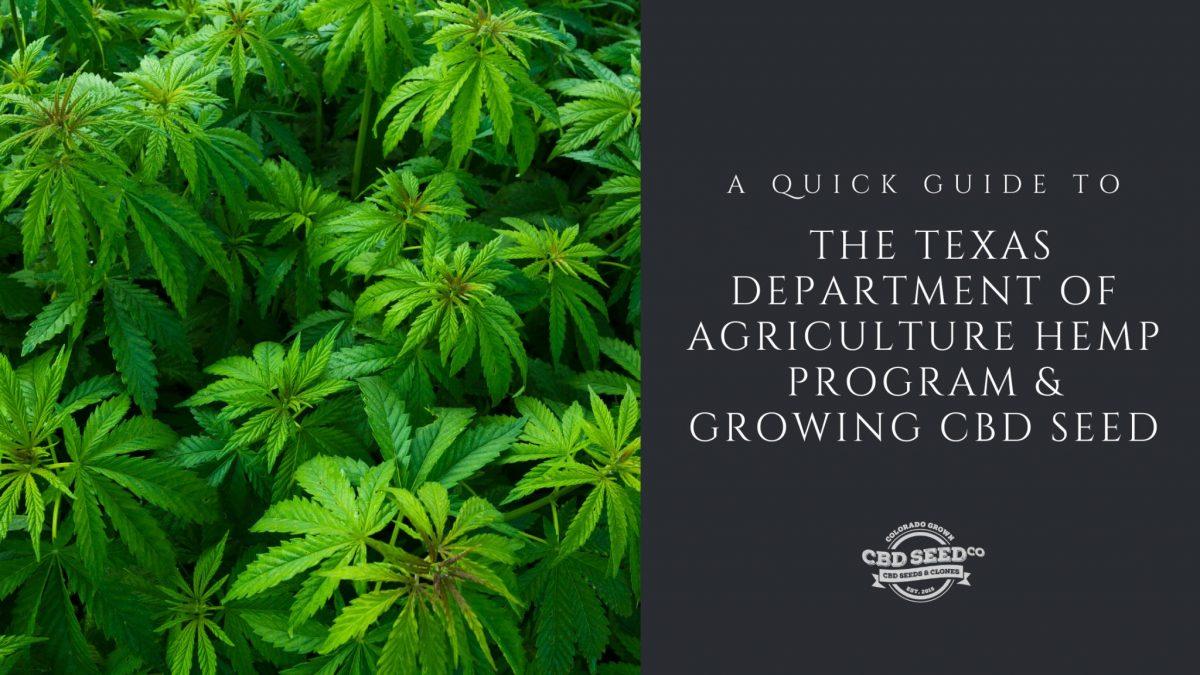 guide texas hemp program growing cbd seed