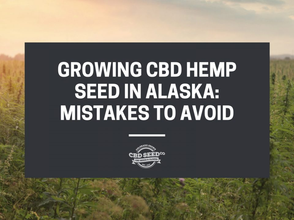 hemp field with a quote, growing cbd hemp seed in alaska: mistakes to avoid