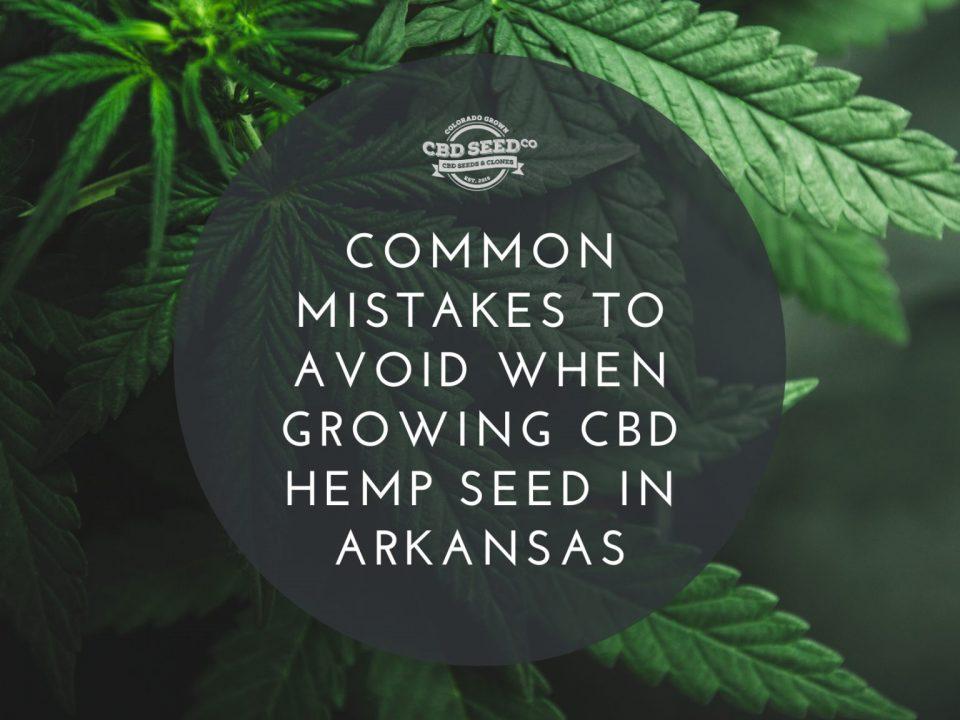 common mistakes to avoid when growing cbd hemp seeds in arkansas