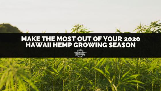 hemp field, make the most out of your 2020 hawaii hemp growing season