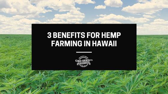 3 benefits for hemp farming in hawaii