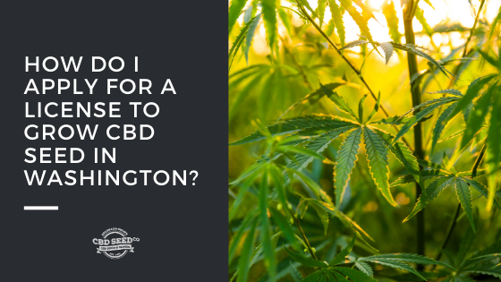how do I apply for a license to grow cbd seed in washington