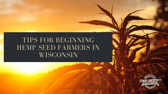tips beginning hemp seed farmers wisconsin