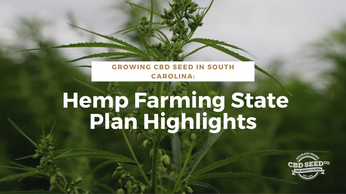 cbd seed south carolina hemp plan