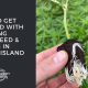get started growing hemp seed clones rhode island