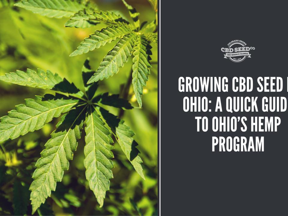 growing cbd seed ohio hemp program