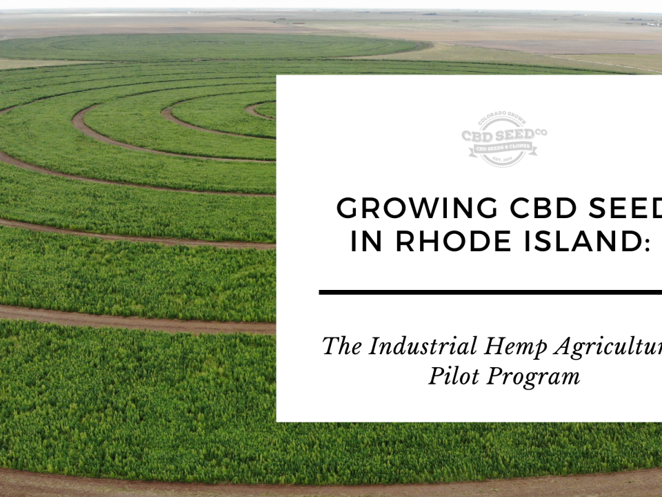 growing cbd seed rhode island hemp pilot program