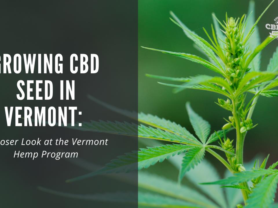growing cbd seed vermont hemp program