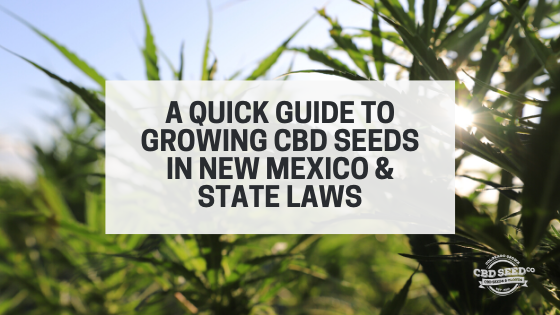 guide growing cbd seed new mexico laws