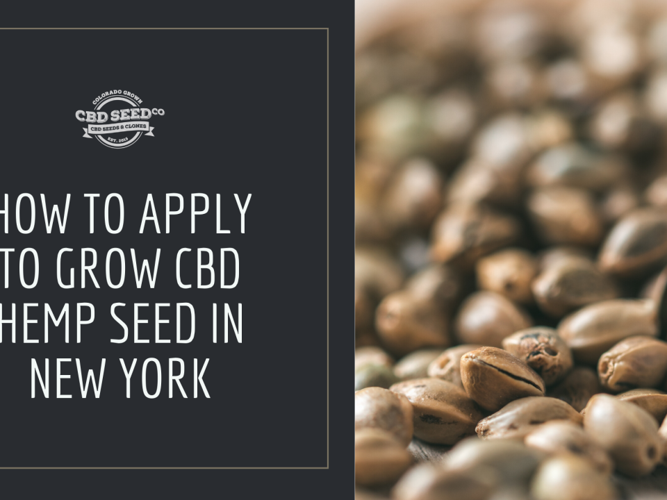 how to apply grow hemp seed new york