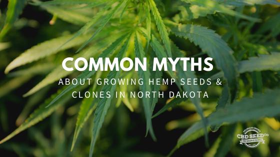 myths growing hemp seeds clones north dakota
