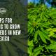 steps apply grow cbd seed new mexico