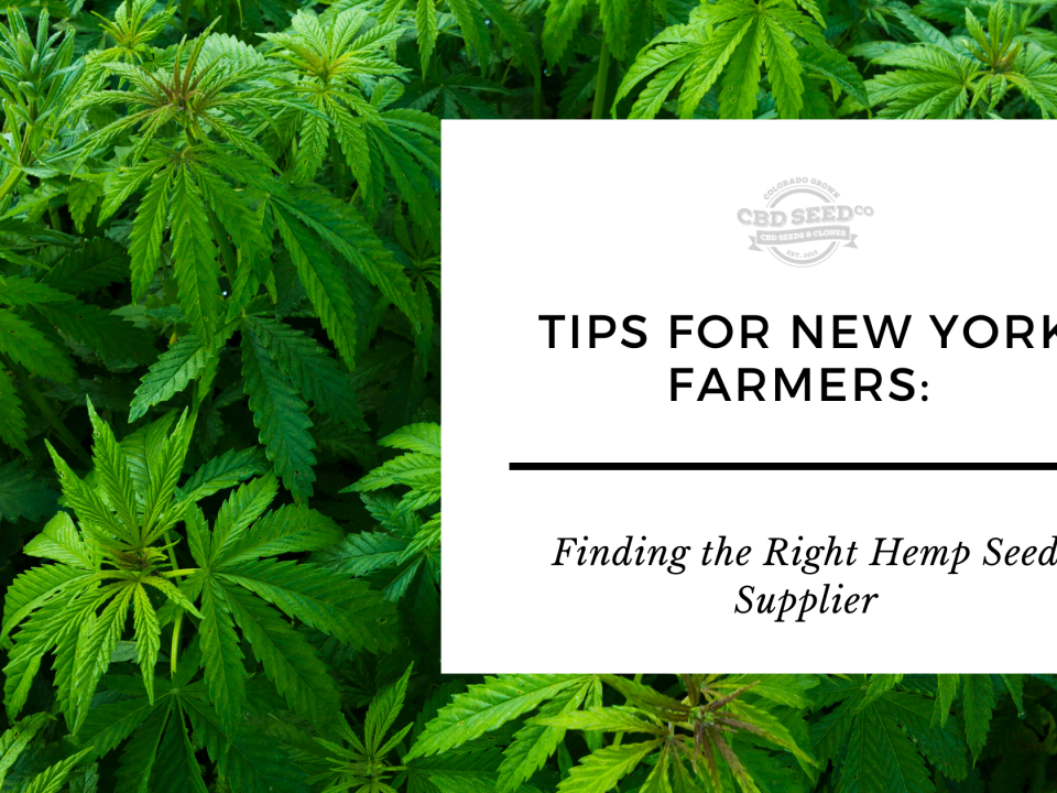 tips new york farmers finding hemp seed supplier