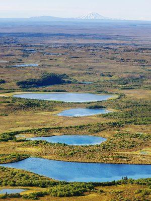 alaska-regions-cbd-seed-co