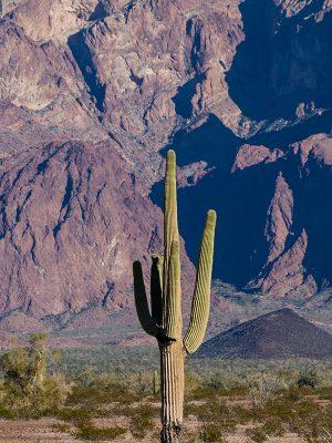 arizona-cbd-seed-co-where-we-grow-law