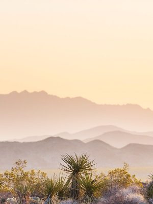 arizona-cbd-seed-co-where-we-grow-regulations