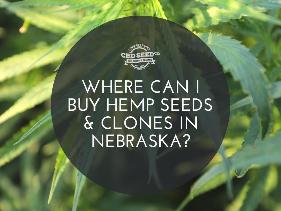buy hemp seeds clones nebraska