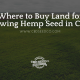 buy land growing hemp seed chile