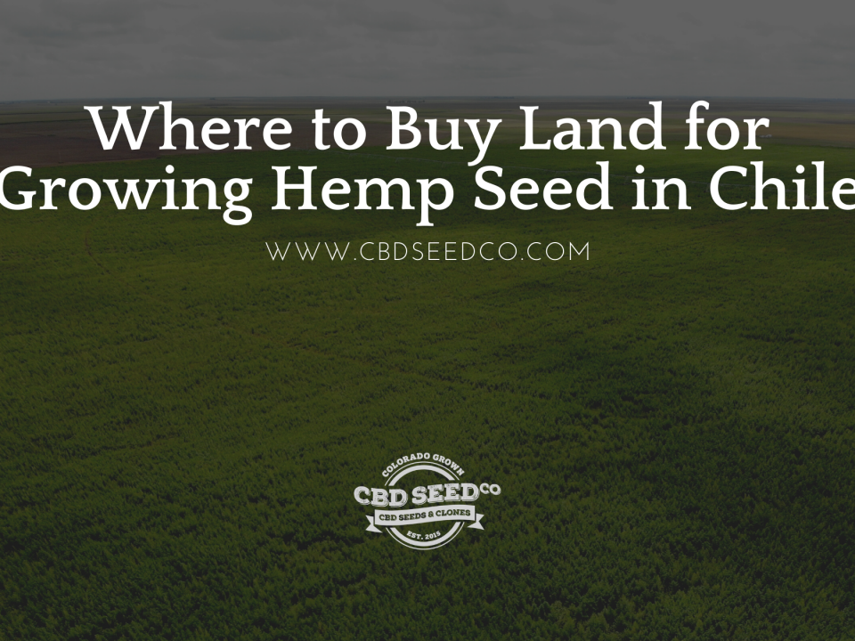 buy land growing hemp seed chile