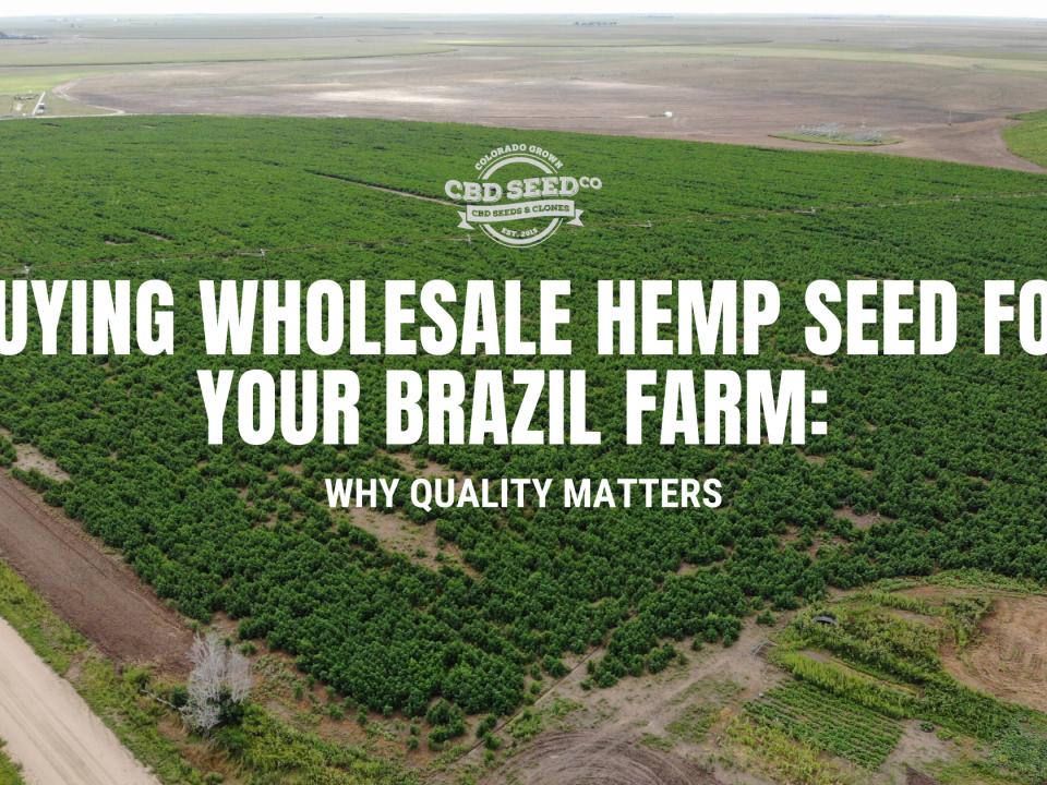 buying wholesale hemp seed brazil farm quality