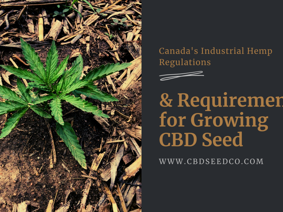 canadaindustrial hemp requirements growing cbd seed